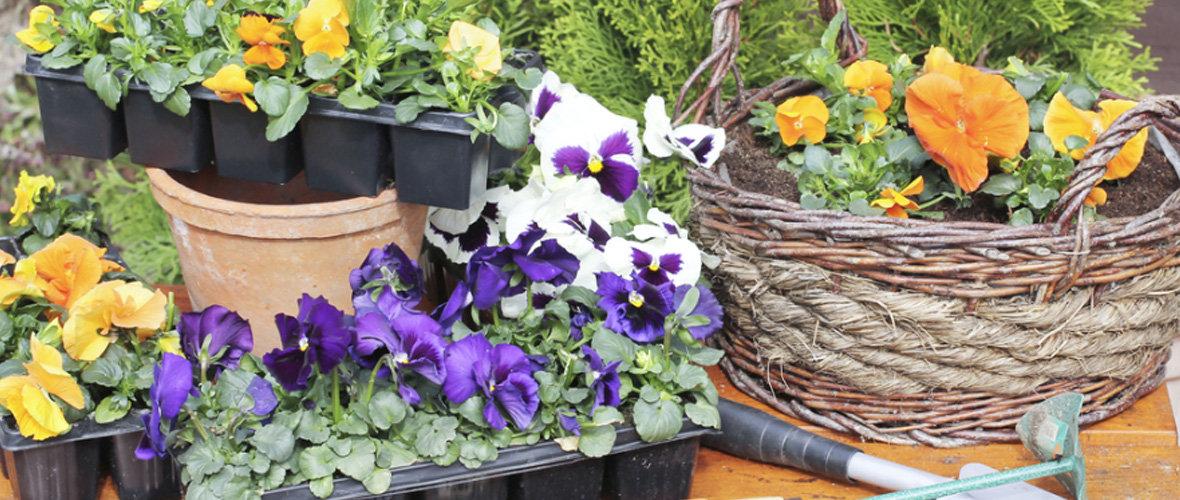 Garden Plants & Seeds Image