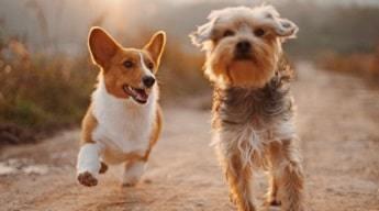 Fetch Dogs
