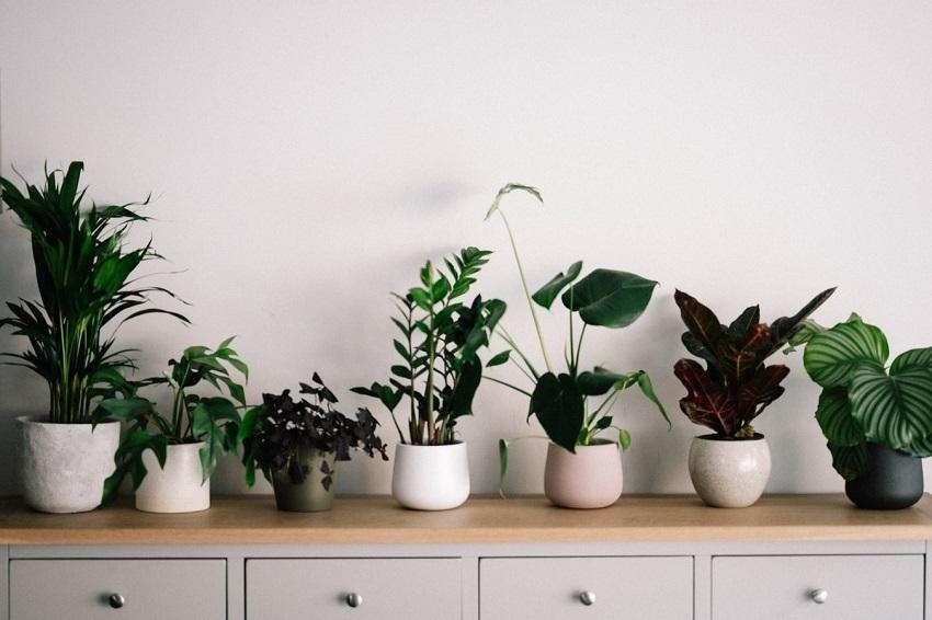 Gardening Direct Indoor Plants