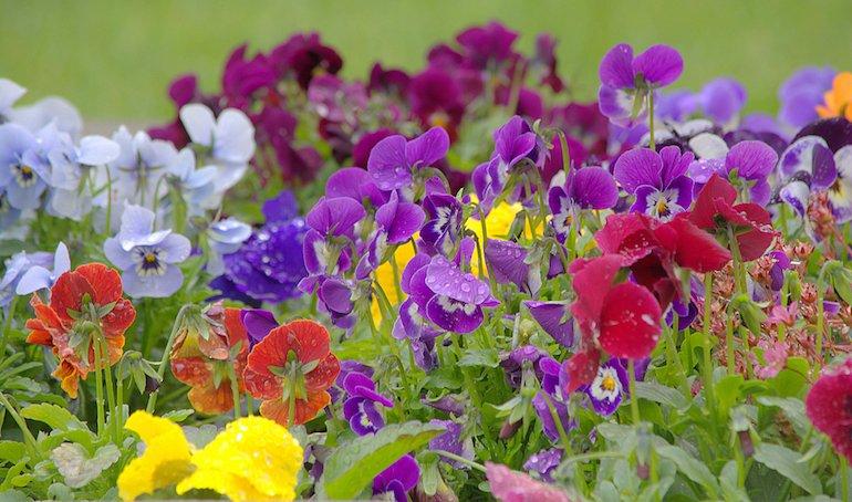 Gardening Direct Discount Codes 5 Off At Myvouchercodes
