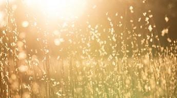 Travelodge Sun