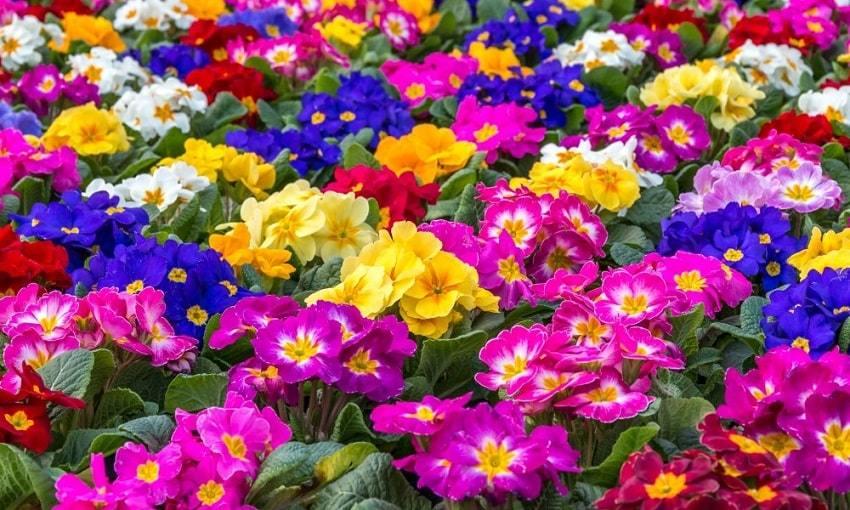 Gardening-Express-Plants