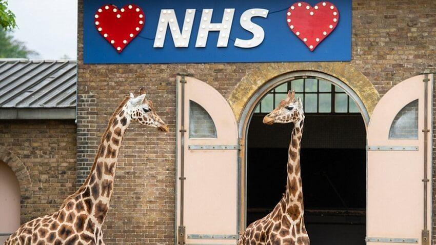 London-Zoo-covid