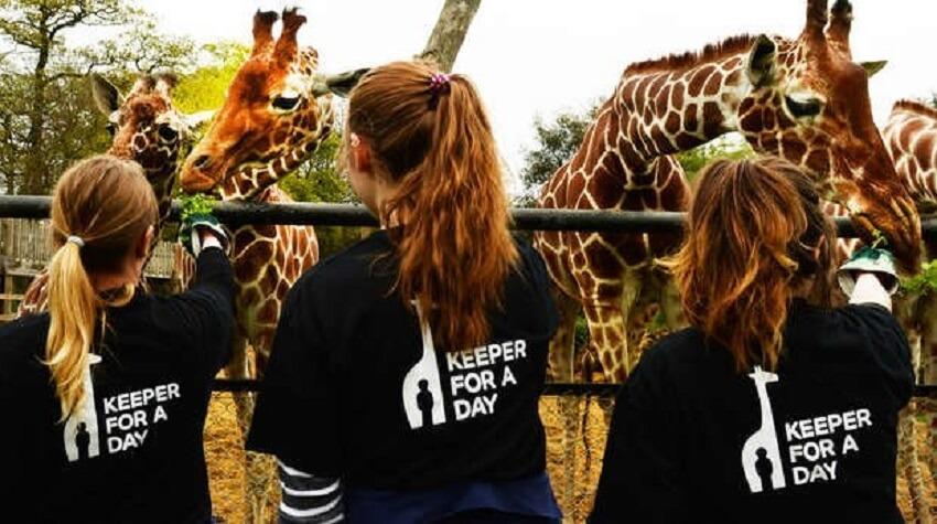 London-Zoo-experiences