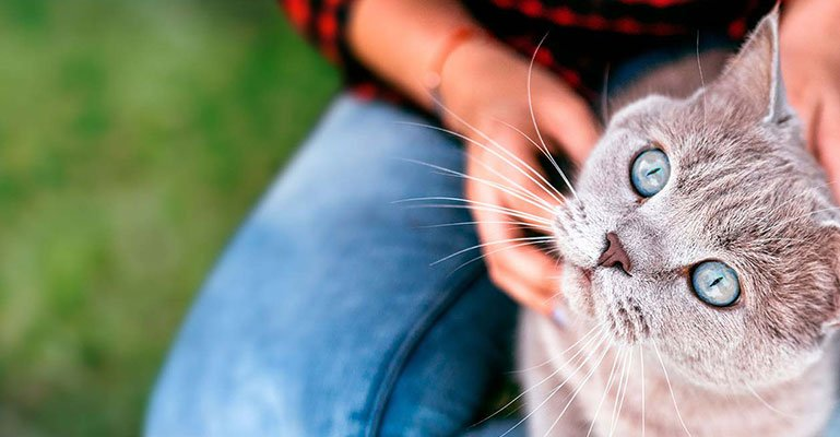 More Than Pet Insurance Cats