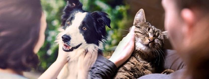 Pet-Drugs-Online-UK